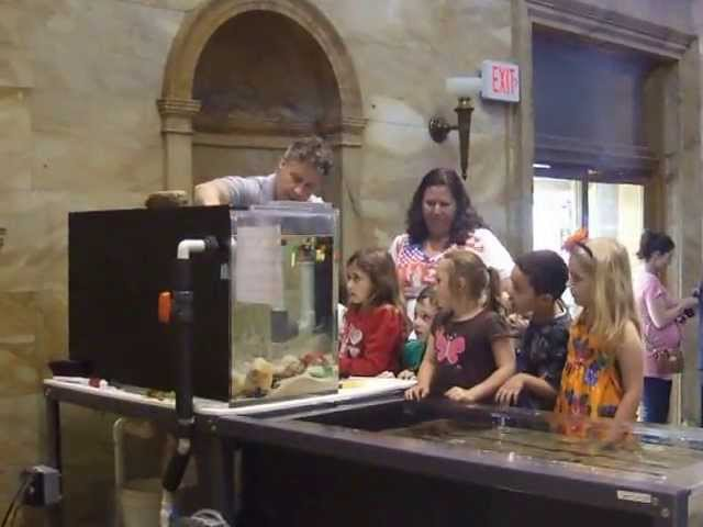 Kids Octopus Demonstration