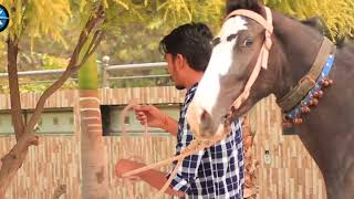 Desi Brahman Na Boliya Kr Chori || Ankush Sharma || NK Group|| 20k7