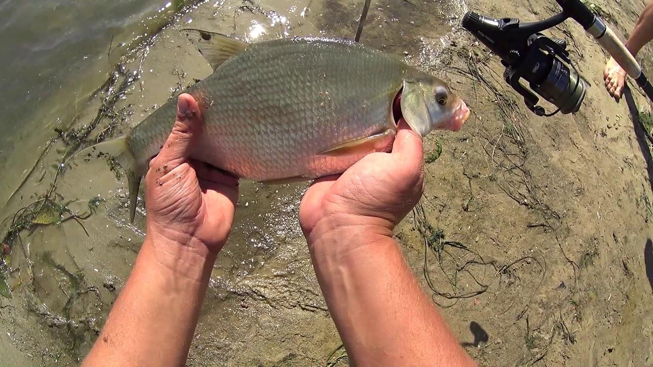 донная рыбалка на всех рыб