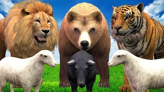 Lion Bear & Gorilla Tiger Animals Finger Family Song || Kids For Nursery Rhymes Compilation Video