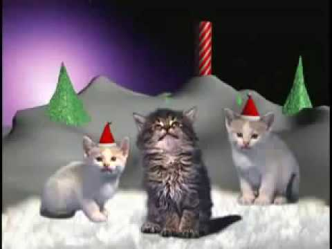 Miauwende Kerst Katten Youtube