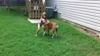 Download American Bulldogs XXX's Kevlar and Wilson's Baylie of RCK 3Gp Mp4