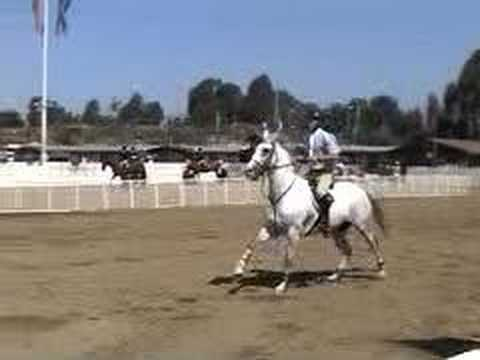 How A Horse Jumps