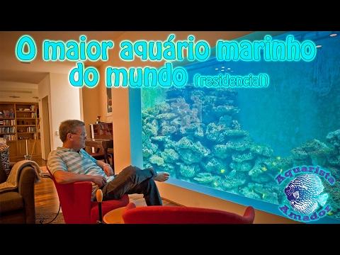 Maior aquário marinho do mundo -  Notícias no Aquário 3