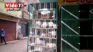 بالفيديو .. تاجر: الغاز والعلف وسوء حالة الجو سبب ارتفاع أسعار الدجاج