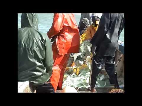 Gambia - een mooie visvangst en aankomst