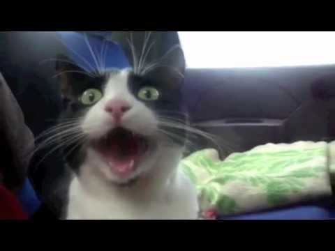 Top 25 Funniest Cat Videos!!! :D