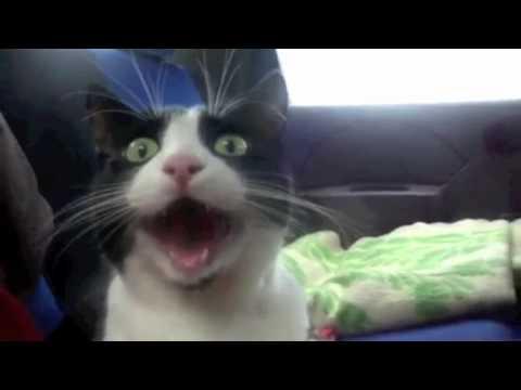Top 25 Funniest Cat Videos!!! :D