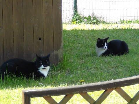 Кот Вася и соседский кот