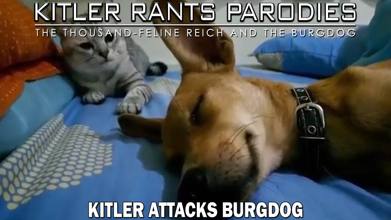 Kitler attacks Burgdog