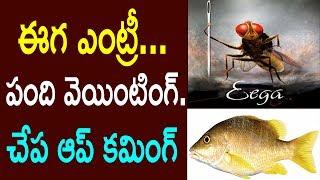ఈగ సినిమా మాదిరి చేప మూవీ రాబోతుంది | Tollywood New Film Fish Based Movie Plan | Cinema Politics