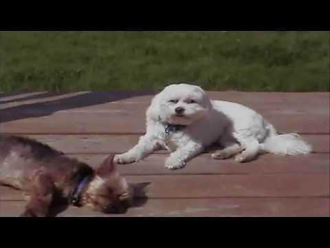 Sparc Mac's Dogs Uncut