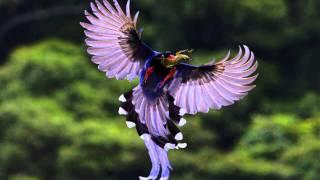 Красивые птицы 1