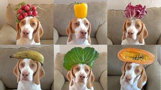 El perro capaz de sujetar 100 frutas y verduras distintas con la cabeza