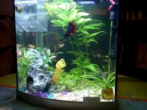 Feeding aquarium fish frozen blood worms youtube for Betta fish feeding