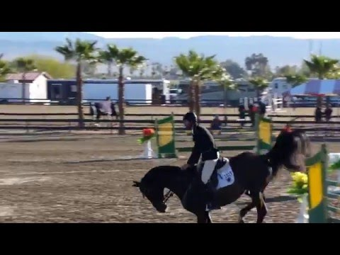 Contento RC - Sire - Thermal week 3 2016 - Rancho Corazon - BDN Sport Horses