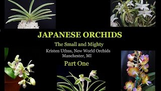 Japanese Orchids: The Small and Mighty.   Part 1 of 3
