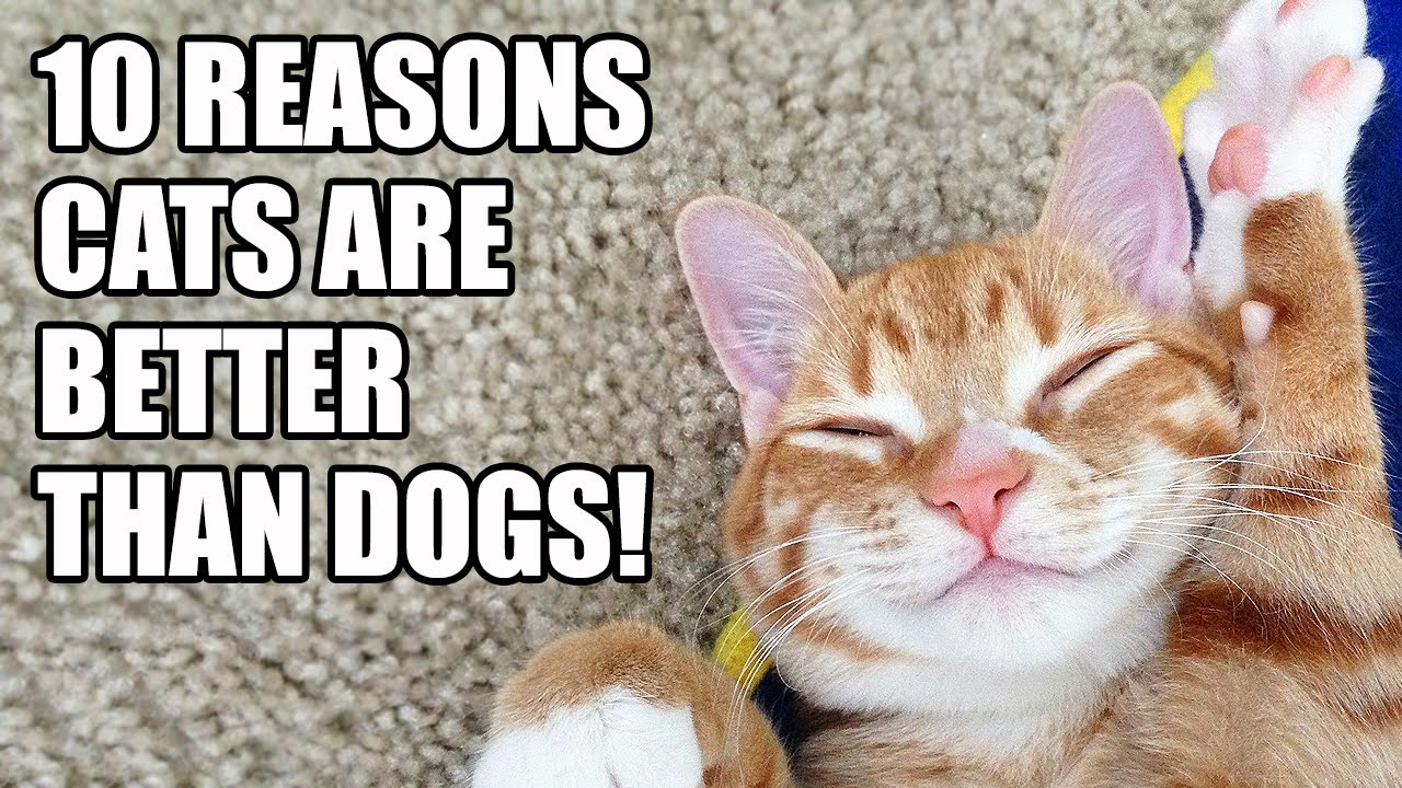 Why Cats Are Better Than Dogs Facts