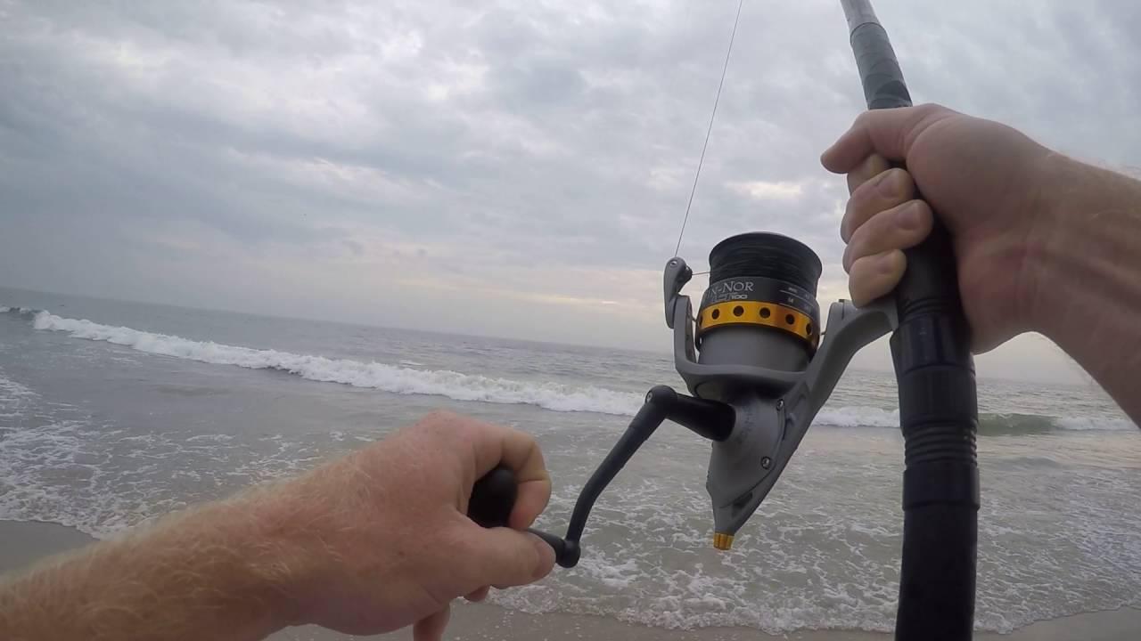 Big sting ray caught on the beach of Ocean City NJ