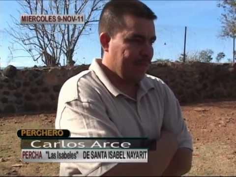 PRESENTACION DE LA PERCHA DE RANCHO LAS ISABELES DE NICHO ARCE PRIMOVISION 2011.wmv