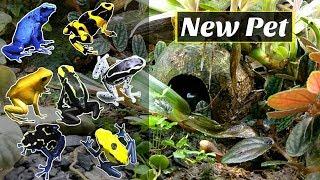 Repticon Pickups (Poison Dart Frogs)