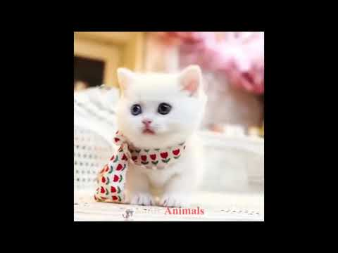Funny And Cute Cats and Kitten Videos 2019 #14 Funny Animals