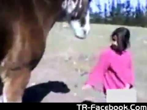 حصان يسوي نفسه حمار