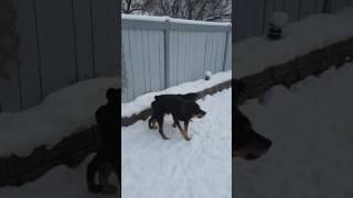 Joey Rescue Dog
