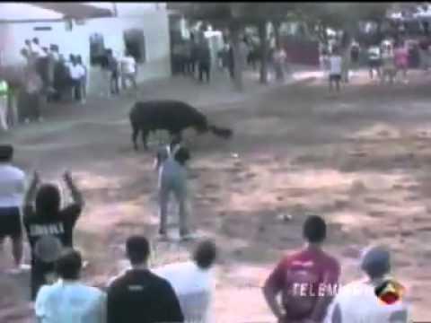 Cão Bull Terrier salva dono de ataque de TOURO
