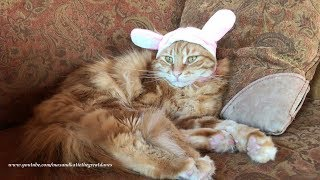 Funny Cat Lazily Protests Easter Rabbit Bunny Ears Hat