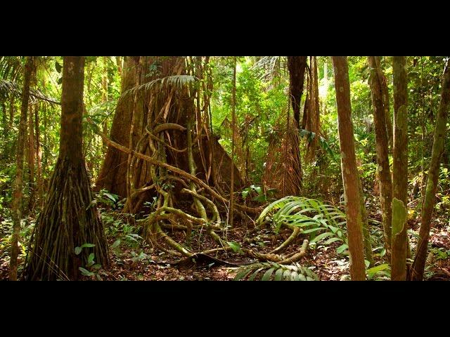 Amazon jungle documentary national geographic