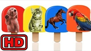 Kid -Kids -Learn Colors And Animals With PET Animals Ice Cream Popsicles For Kids/Zoo Animals Learn