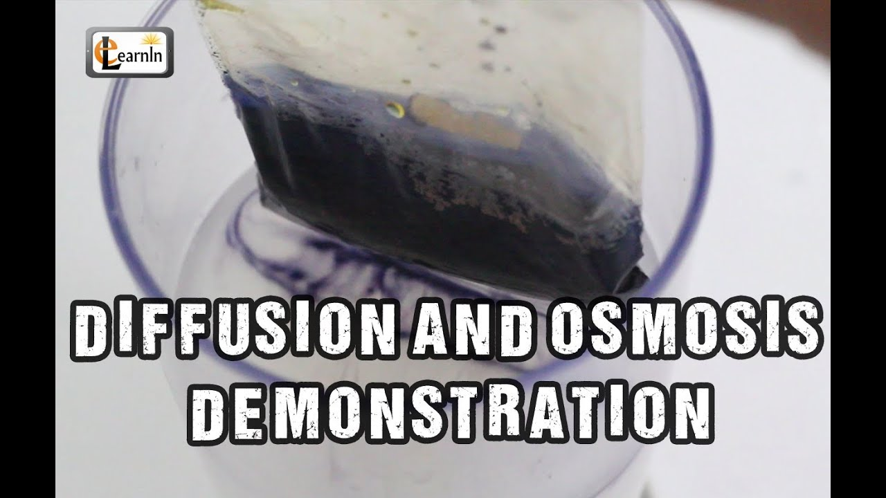 """a chemistry experiment on osmosis This experiment answers or """"naked,"""" egg if you understand the chemistry of membrane is called osmosis if you take your naked egg and place it."""