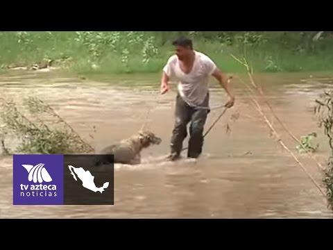 Rescatan a perro atrapado en la corriente de un río | Azteca Chihuahua
