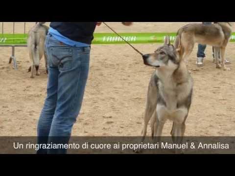 Croll - Giovane campione italiano  All. Il Paradiso del Lupo