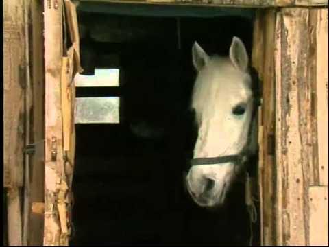 Дети спасают брошеных и больных лошадей в телеминиатюре Александры Ливанской Репортаж ни о чём