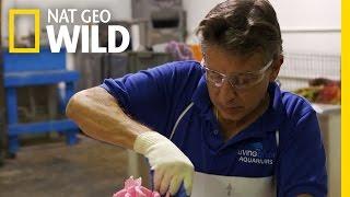 Fishin' Impossible: America's First Zoo | Fish Tank Kings