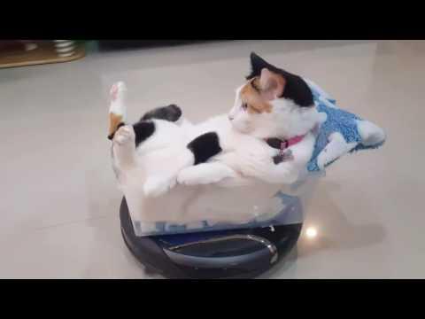 Amazon Roomba Review Dog Poop