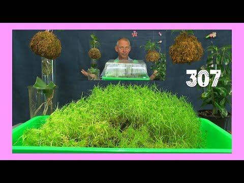 Die Welt der Pflanzen entdecken Sphagnum und mehr