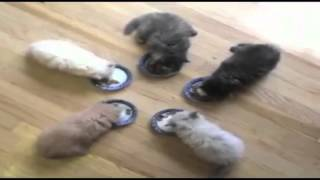 Kittens at Lunch and more mooore fun Look it