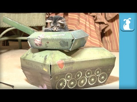 Fluffy Kitten In A Tank, AWESOME - Cat Toy
