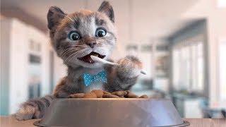 Little Kitten Preschool - Kitten Go To School Adventure - Fun Educational Games For Kids