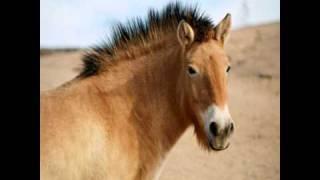 Opie & Anthony: Horse Sex