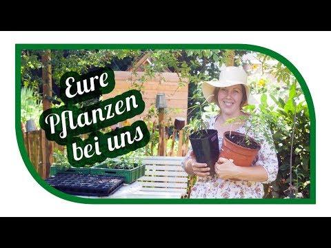 Eure Pflanzen bei uns im Gartengemüsekiosk – Danke für die Vielfalt
