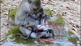 Part2, Break my heart ! Lori baby monkey cry loudly more and more when see mom come near her.