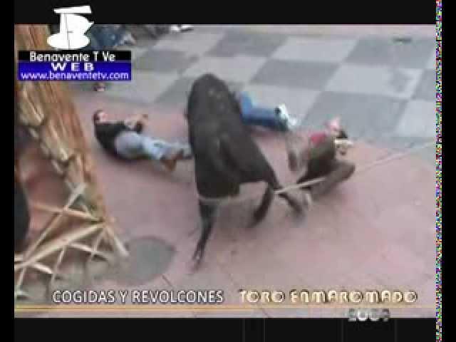 Cogidas y Revolcones TORO ENMAROMADO 2009 (Benavente T Ve TELEVISIÓN)