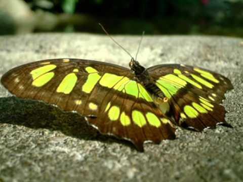 Вагнер - Танец бабочек