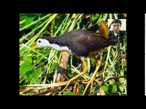 Tieng Chim Quoc Nuoc video