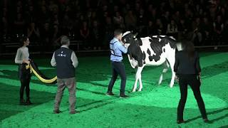 Supreme Champion Rinder Junior Bulle Expo 2018