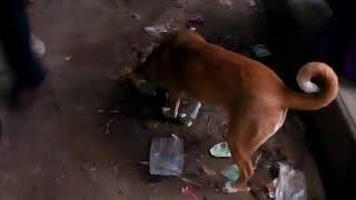 INDIAN Street Dog Eating Food      Pet and Animals